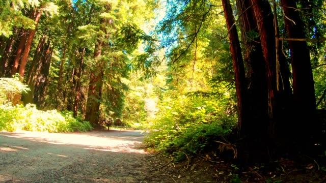 stockvideo's en b-roll-footage met rijden door het redwood forest in californië - sequoiafamilie