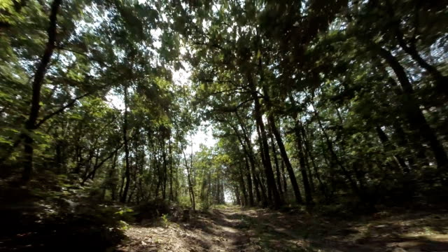 stockvideo's en b-roll-footage met driving through the woods. personal perspective - onverharde weg