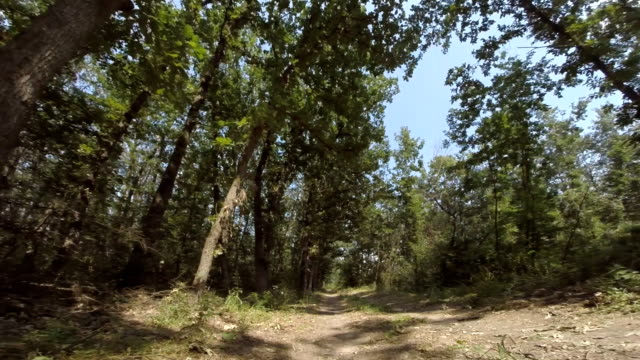 Driving Through the Woods. Personal Perspective