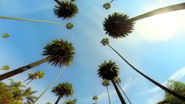 la ws driving under palm trees - beverly hills california stock videos & royalty-free footage