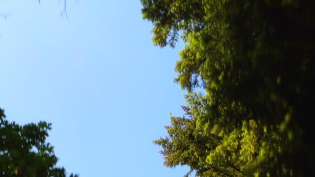 Conduite sous les arbres