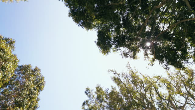 driving under trees with the sun in the sky - low angle view stock videos & royalty-free footage