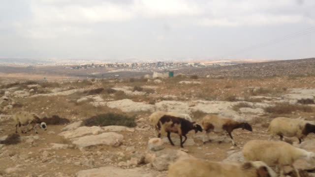 driving up to and exchanging words with a young bedouin sheep herder in the negev desert southern israel - herder stock videos & royalty-free footage