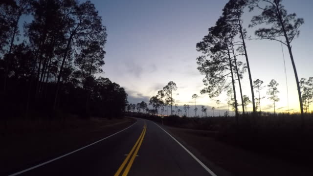 driving/process plates - okefenokee national wildlife refuge stock videos and b-roll footage