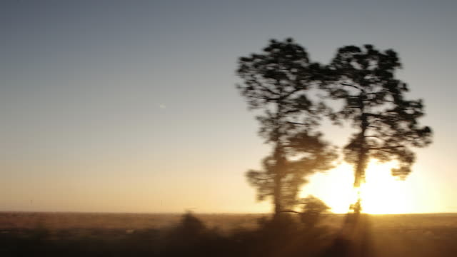driving/process plates. view from car moving along country road pov leftside, non urban road, trees silhouetted at sunrise - moving past stock videos & royalty-free footage