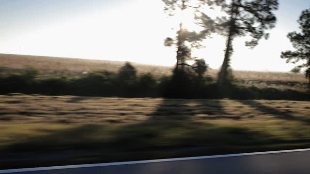 driving/process plates.view from car moving along country road pov left side, roadside and trees, early morning with blue sky. - moving past stock videos & royalty-free footage