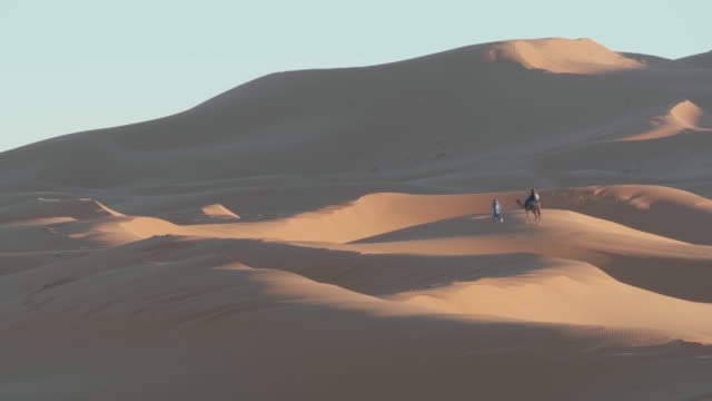Dromedary Camel crossing the desert with a beduin