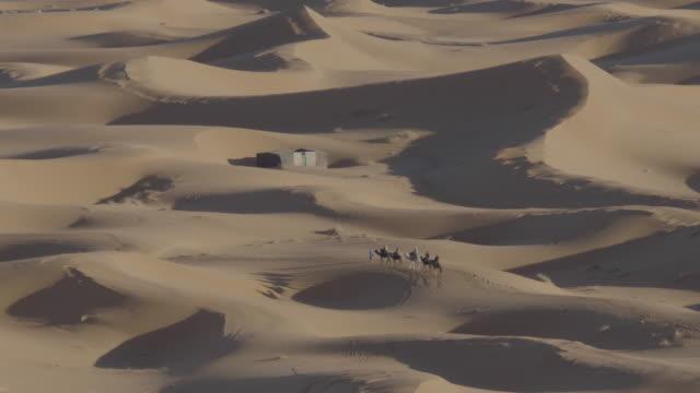vidéos et rushes de dromedary camels crossing the desert - minorité