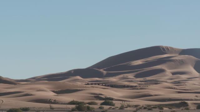vídeos de stock e filmes b-roll de dromedary camels crossing the sahara dunes - reserva selvagem