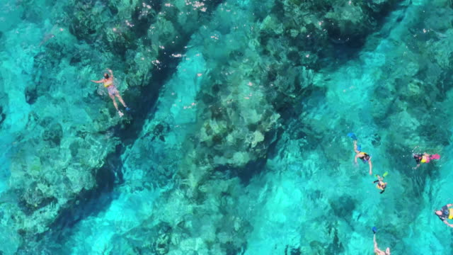 Drone 4k Aerial top down view of snorkeling at the Barrier reef on perfect day