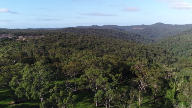 Clear blue sky Camera pans back over bushland and Gums tree forest with undulating hills / Paddock in the foreground / Looking down and over top of...