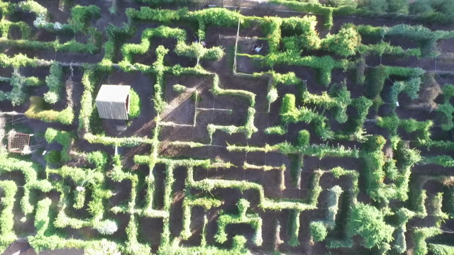 vídeos de stock e filmes b-roll de drone aerial directly overhead garden maze with people trying to find their way through - quebra cabeças