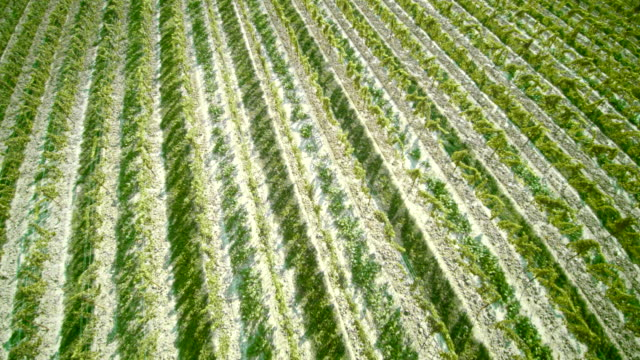 drone aerial footage of wineyard - ontario canada stock videos & royalty-free footage
