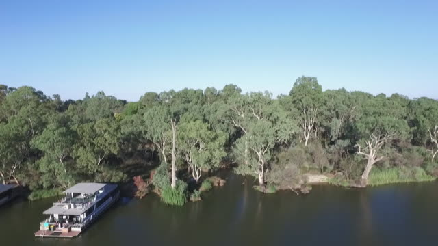 drone aerial houseboat cruising along Murray River lower to houseboats moored and view along banks seeing weeping willows and gum trees on banks