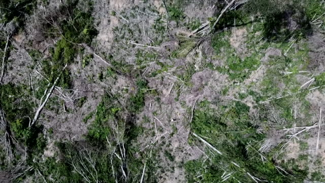 drone aerial of bare earth from deforestation in the amazon rainforest brazil - amazon region stock videos & royalty-free footage
