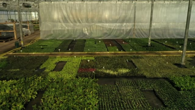 drone aerial over potted plants inside greenhouse at a garden nursery in caernarfon north wales - above stock videos & royalty-free footage