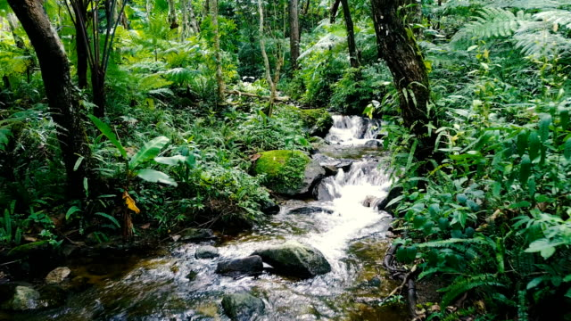 drone aerial shot approach to tropical waterfall, beautiful small creek in rain forest with waterfall and bird sound for meditation atmosphere in north of thailand. - cascade range stock videos & royalty-free footage