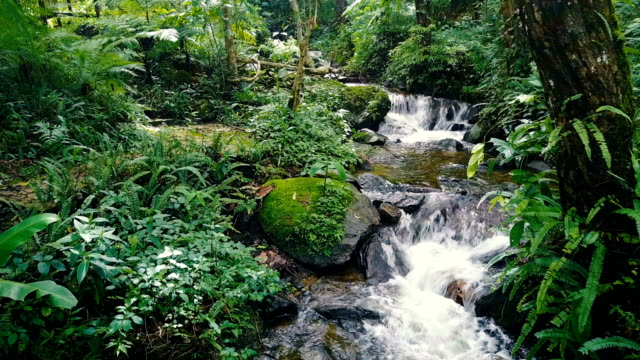 drone aerial shot approach to tropical waterfall with beautiful small creek in rain forest of north of thailand - rainforest stock videos & royalty-free footage