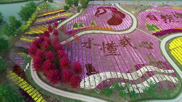 drone aerial video of outdoor chrysanthemum exhibition and red maple landscape at baima lake ecotourism scenic spot, huai'an city, jiangsu province. - eco tourism stock videos & royalty-free footage
