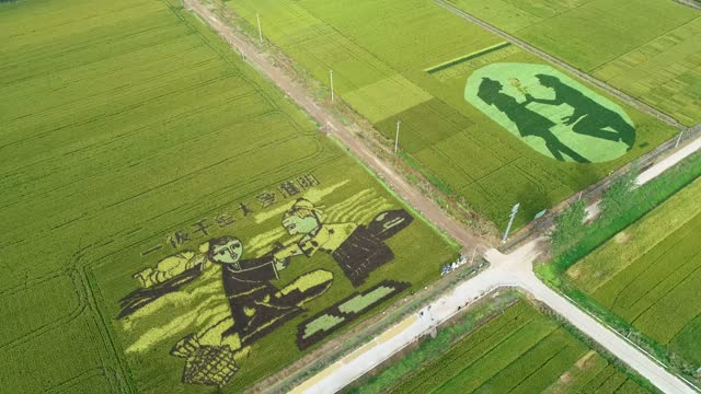 stockvideo's en b-roll-footage met drone aerial video of paddy field art also known as tanbo art in an ecological rice industrial base in huai 'an city, jiangsu province. - hoofddeksel