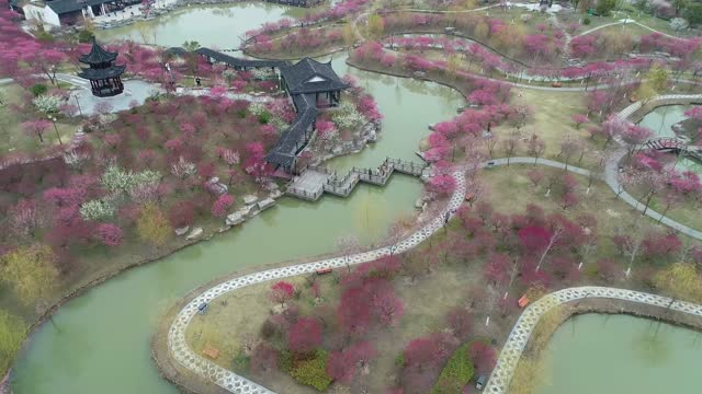 drone aerial video of plum blossoms among ancient buildings in the scenic area of mei flower bay in yancheng, east china's jiangsu province. footage... - china east asia stock videos & royalty-free footage