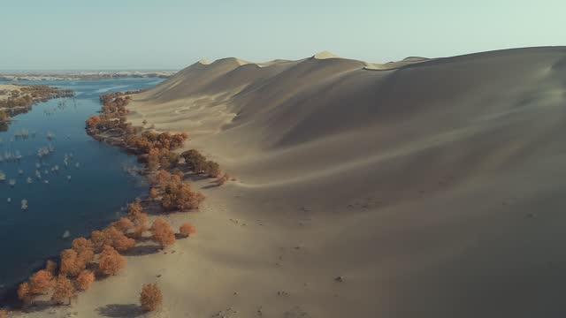 drone aerial video of taklamakan desert sand dunes in yili county, xinjiang province. filmed by: costfoto / barcroft studios / future publishing - 新疆ウイグル自治区点の映像素材/bロール