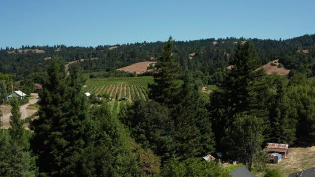 stockvideo's en b-roll-footage met drone luchtfoto van wijngaard in anderson valley in noord-californië - heuvellandschap