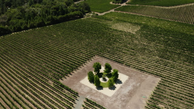 drone aerial view of vineyard in anderson valley in northern california - viticoltura video stock e b–roll