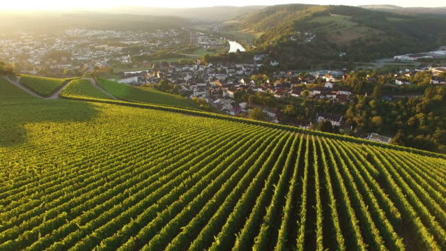 Drone air view of vineyards in autumn, Saar Valley, Saarburg, Rhineland-Palatinate, Germany