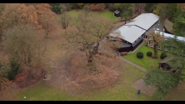 drone and ground shots of gilwell oak the woodland trust's tree of the year selected by the scout association - scout association stock videos and b-roll footage