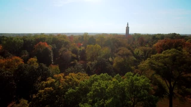 drone - autumn treetops in park, clear day - richmond virginia stock videos & royalty-free footage