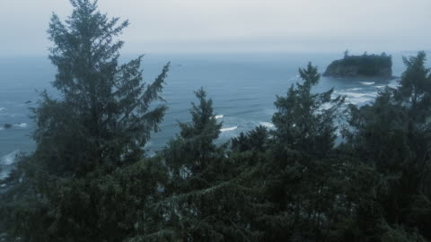 drone camera shoots the tops of trees on a rocky ocean coast with fog on the horizon at ruby beach, washington, usa - north stock videos & royalty-free footage