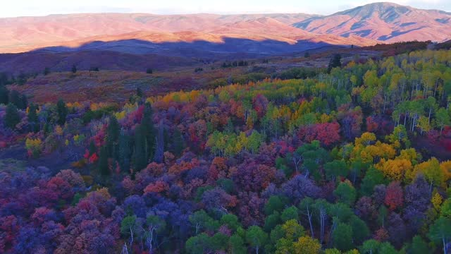 drone captured the spectacular palette of fall colors in the landscape around the snowbasin resort in huntsville, utah, on october 2. this footage... - https stock-videos und b-roll-filmmaterial