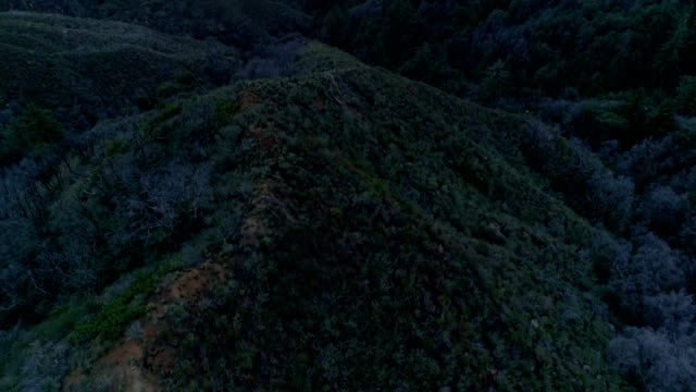 a drone captures a forest in angeles national forest arcadia california - angeles national forest stock videos and b-roll footage