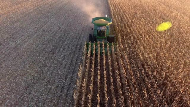 a drone captures a harvester combine harvesting corn in hutchinson minnesota - corn cob stock videos & royalty-free footage