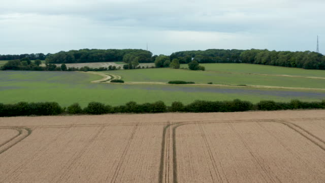 drone clip flying along the tractor tracks in a wheat field. - tranquil scene stock videos & royalty-free footage