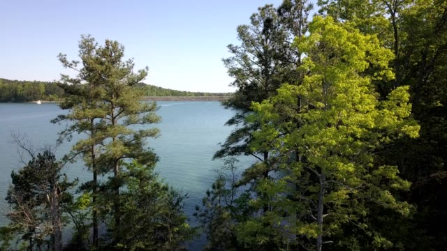 a drone descends behind trees by lake lanier in buford georgia - 1956 stock videos & royalty-free footage