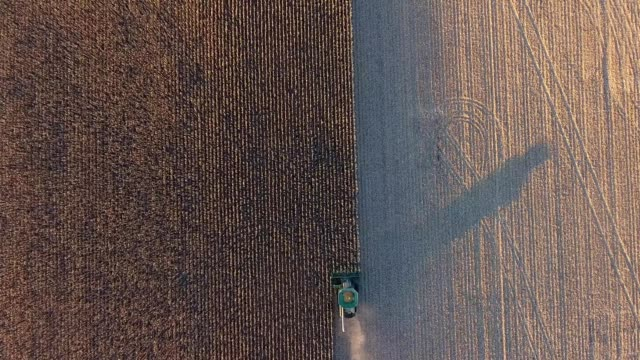 A drone descends on a harvester combine harvesting corn in Hutchinson Minnesota