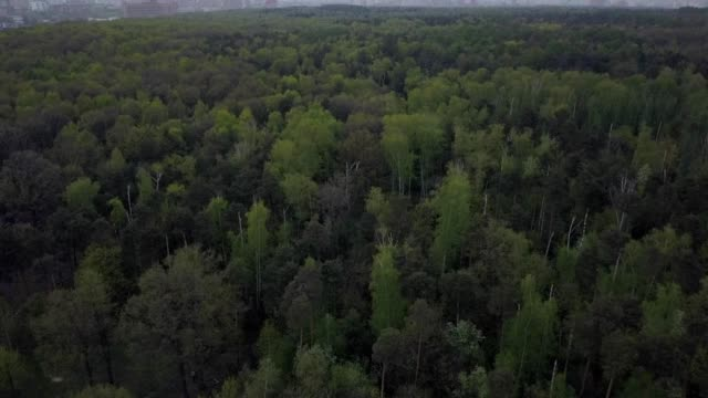 a drone flies above the forest of timiriazevsky park moscow russia - dronebase stock videos and b-roll footage