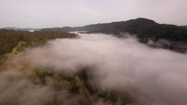 a drone flies around early morning fog in guerneville california - dronebase stock videos and b-roll footage