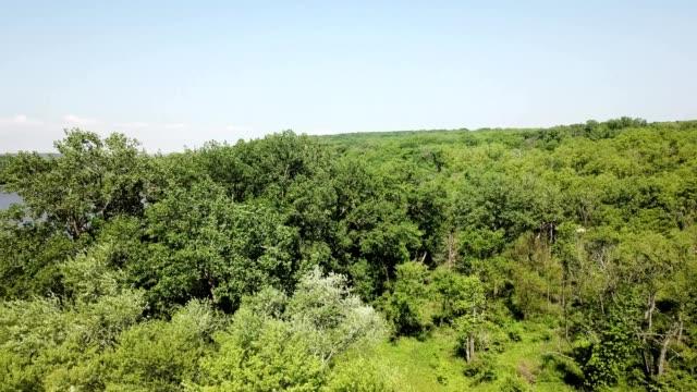 vidéos et rushes de a drone flies around trees towards cal sag slough in willow springs illinois - marécage