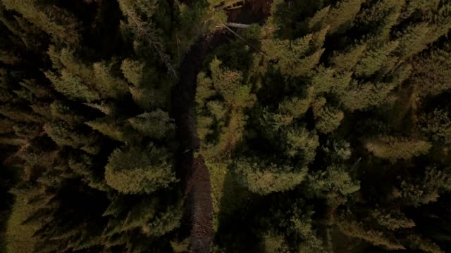 vidéos et rushes de a drone flies birdseye over a stream in a forest in bozeman montana - bozeman