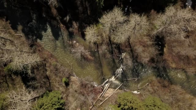 vidéos et rushes de a drone flies birdseye over a winding river through a forest in bozeman montana - bozeman