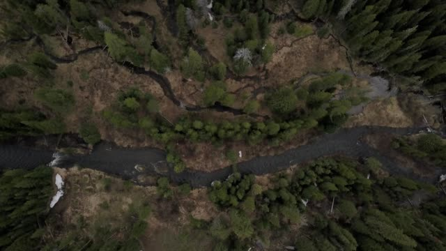 vídeos de stock, filmes e b-roll de a drone flies birdseye over a winding river through a forest in bozeman montana - bozeman