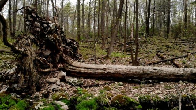 a drone flies over a fallen tree by a mossy stream in tannersville pennsylvania - poconobergen bildbanksvideor och videomaterial från bakom kulisserna