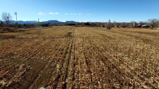 a drone flies over a hay field corn maze in broomfield colorado - hay maze stock videos & royalty-free footage