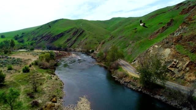 stockvideo's en b-roll-footage met a drone flies over a stream with swarming birds in fresno california - fresno californië