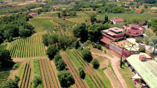 a drone flies over a vineyard in montecarlo italy - dronebase stock videos and b-roll footage