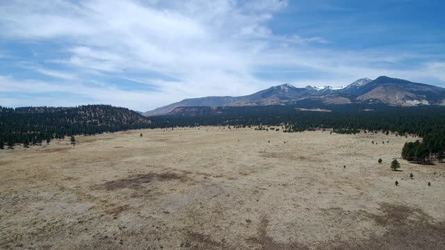 a drone flies over an open field in the coconino national forest flagstaff arizona - flagstaff arizona video stock e b–roll