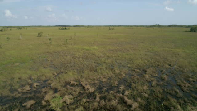 a drone flies over everglades in everglades city florida - everglades national park stock videos & royalty-free footage
